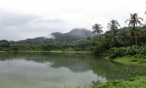 Zdjecie INDIE / Kerala / Kotamangalam / Thattekkad,rezerwat ptaków