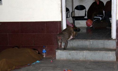 Zdjecie INDIE / Uttar Pradesh / Mahoba / Małpa złodziejka