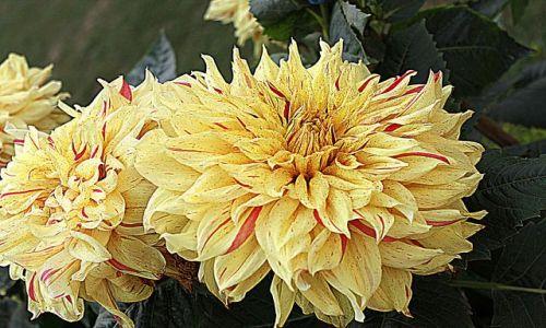 Zdjecie INDIE / Madhya Pradesh / Khajuraho / kwiatek