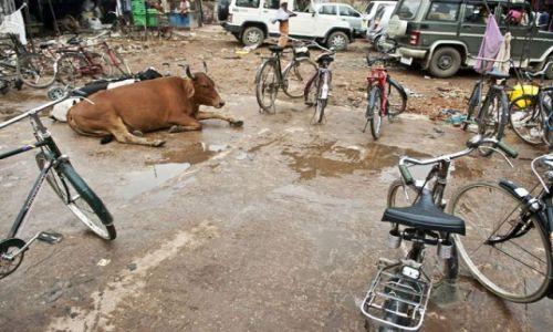 Zdjecie INDIE / Uttar Pradesh / Waranassi / ***
