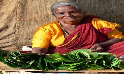 Zdjecie INDIE / - / Munnar / Sprzedawczyni betelu.