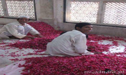 Zdjecie INDIE / - / Fatehpur Sikri / Biel i róż