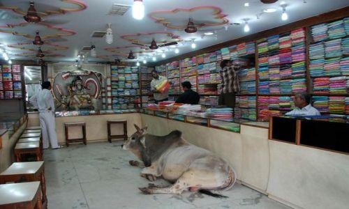 Zdjecie INDIE / Uttar Pradesh / Waranasi / Co może święta krowa
