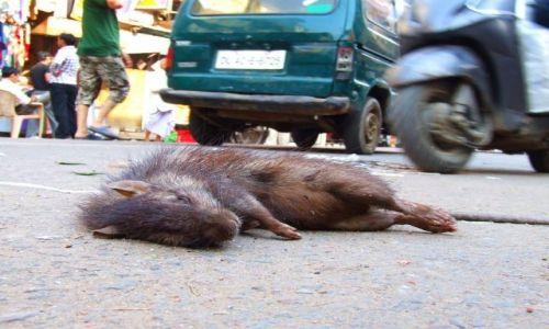 Zdjecie INDIE / - / New Delhi / Witamy w New De