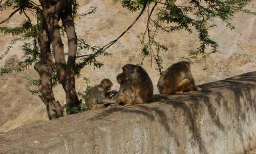 INDIE / Radżastan / Jaipur / W drodze do Świątyni Małp