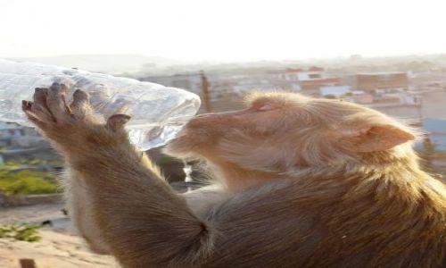 Zdjecie INDIE / - / Jaipur / reklama wody mineralnej