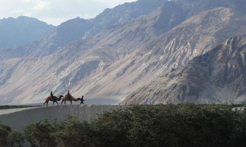Zdjecie INDIE / Karakorum / Rzeka Shiok / Wydmy