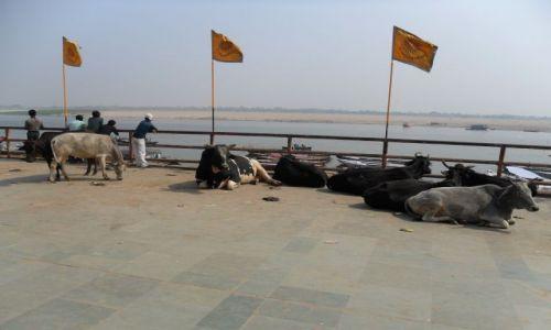 INDIE / Uttar Pradesh / Waranasi / Odpoczynek świętych