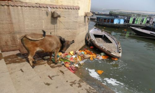 INDIE / Uttar Pradesh / Waranasi / Mmmm, pyszności