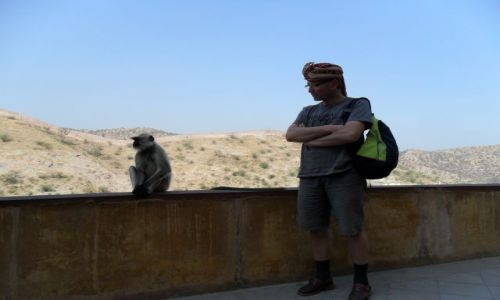 INDIE / Radżastan / Jaipur / Oko maharadży malpiszona tuczy