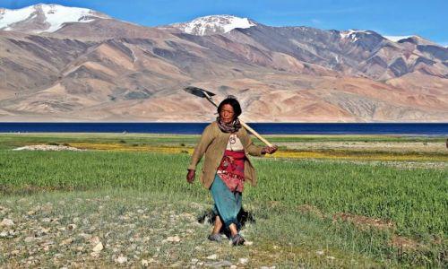 Zdjecie INDIE / Ladakh / Jezioro Tsomori Ri / W pole