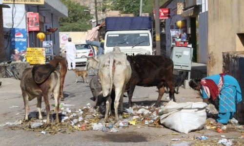 Zdjecie INDIE / Radżastan / Jaipur / Ulica
