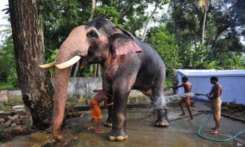 INDIE / Kerala / --- / Przygotowania do ceremonii świątynnych w Tripunithura