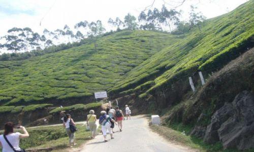 Zdjecie INDIE / Kerala / Munnar / Indie