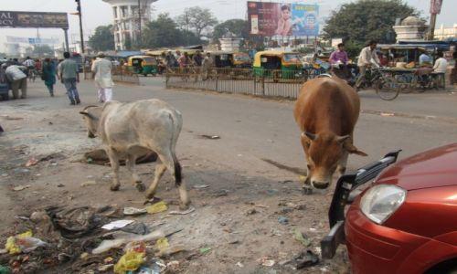 Zdjecie INDIE / płn część Indii / Gorakhpur / Indie, Gorakhpur