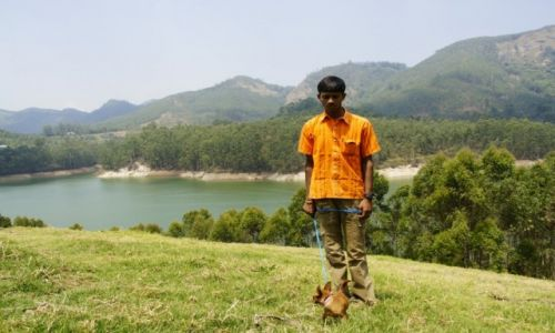 Zdjecie INDIE / Kerala / Munnar / Chihuahua w Ind
