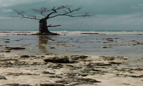 Zdjęcie INDIE / Andamany / Havelock  / Plaża Słoni -  konkurs