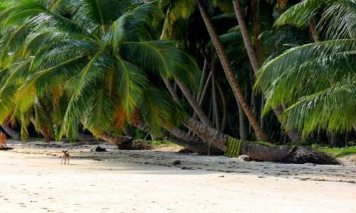 Zdjęcie INDIE / Andamany / Havelock / Psiak na plaży