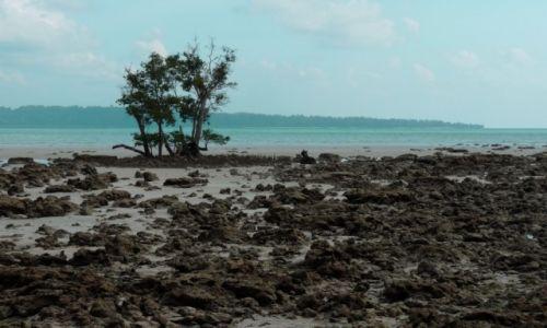 Zdjęcie INDIE / Andamany  / Havelock / Plaża