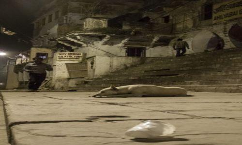 Zdjęcie INDIE /  Uttar Pradesh  / Waranasi  / Pies