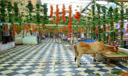 Zdjecie INDIE / Jaipur / Jaipur  / konkurs