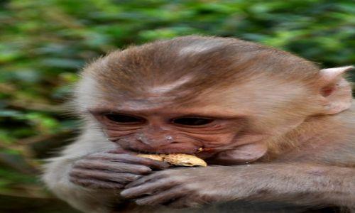 INDIE / - / Wioska Ghalta, świątynia małp / W świątyni małp
