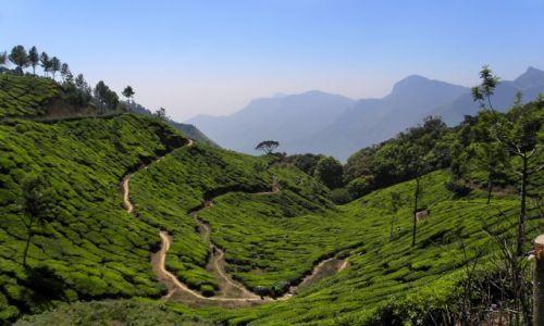 Zdjecie INDIE / Kerala / Munnar / Tam, gdzie rośnie herbata