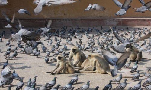 Zdjecie INDIE / - / Jaipur / Konkurs