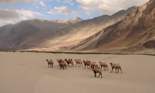 INDIE / Ladakh / Dolina Nubra  / pustynia w dolinie Nubra