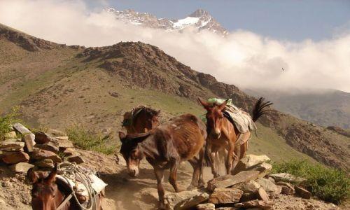 INDIE / Ladakh  / w drodze z Leh do Manali  / bez tytułu