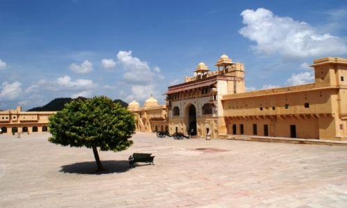 Zdjęcie INDIE / Jaipur / Fort Amber / drzewo