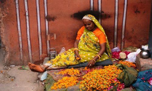 INDIE / - / Jaipur / kwiaty