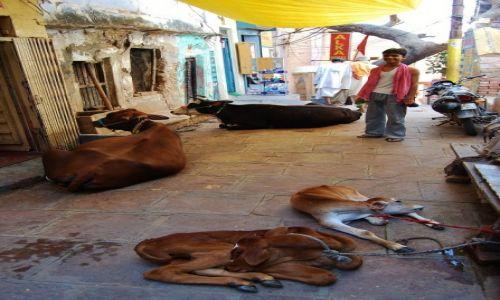 Zdjecie INDIE / Uttar Pradesh / Varanasi / Zaułek