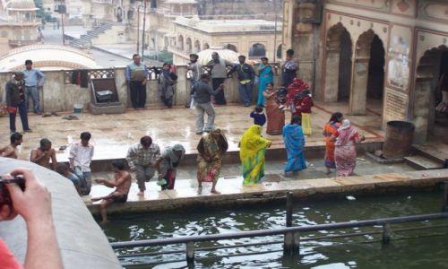 Zdjęcie INDIE / Radzastan / monkey temple / ..