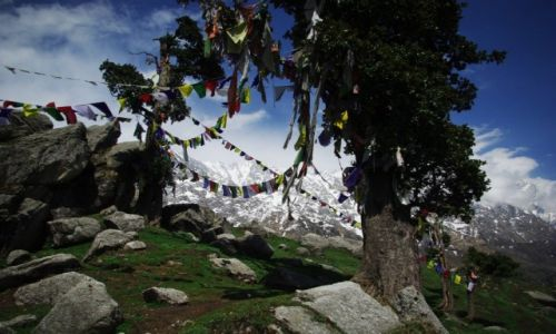 Zdjecie INDIE / Himalaje / McLeod Ganj / Konkurs