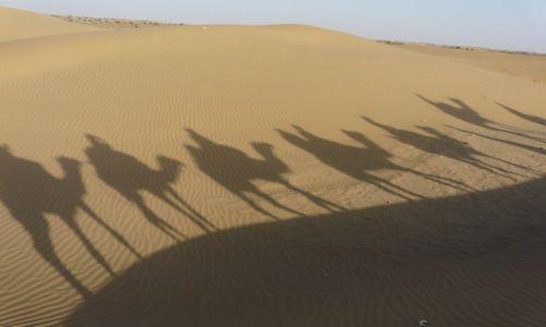 Zdjecie INDIE / Rajasthan / Jaisalmer / Camel safari