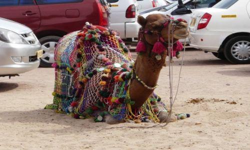 Zdjecie INDIE / Rajasthan / Jodhpur / Ładnie zaparkowany:)