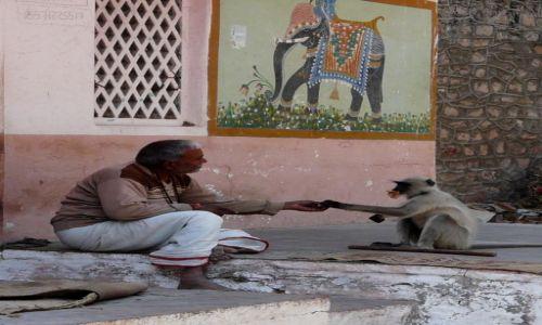 Zdjecie INDIE / Rajasthan / Ranakpur / Lunch time