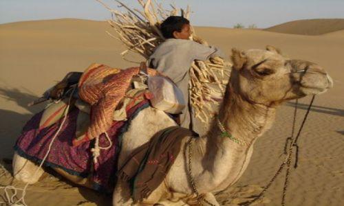 Zdjecie INDIE / Rajastan / Pustynia Thar / Safari