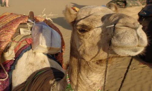 Zdjecie INDIE / Rajastan / Pustynia Thar / Nasz wielbłąd z Pustyni Thar