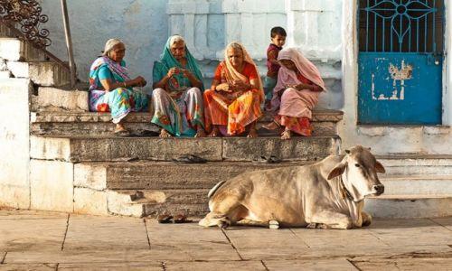 Zdjecie INDIE / Rajasthan / Pushkar / Święta krowa