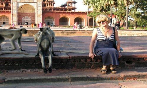 Zdjęcie INDIE / Radżastan / Agra / Who is who?