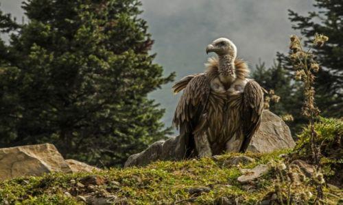 Zdjęcie INDIE / Himachal Pradesh / Manali / Ptaszek