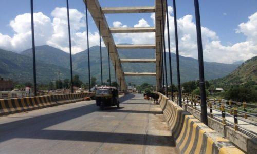 Zdjęcie INDIE / Himalaje / Shimla / Krowy w Indiach
