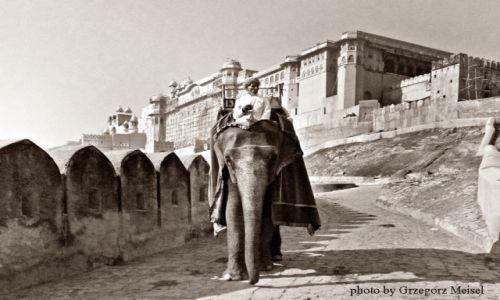Zdjecie INDIE /  rajasthan / Nie pamietam :) / Droga słonia