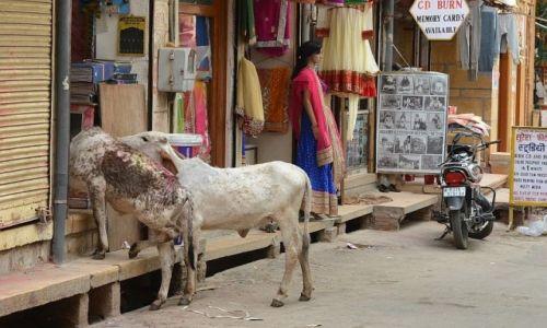 Zdjecie INDIE / Rajasthan /  Jaisalmer / ...na zakupy