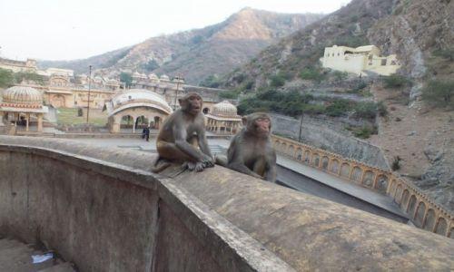 Zdjecie INDIE / Delhi / Galtaji / Świątynia Małp