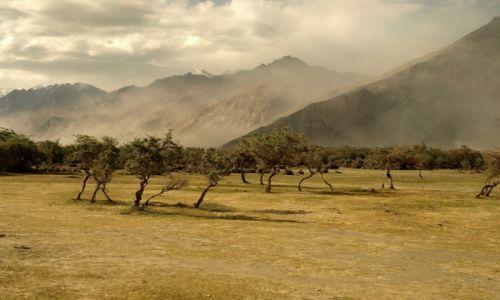 Zdjecie INDIE / Jammu i Kashmir / Ladakh, Hunder / Dolina Nubry