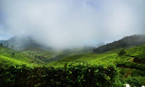 Zdjęcie INDIE / Kerala / Munnar / Moonnar / Pola herbaciane