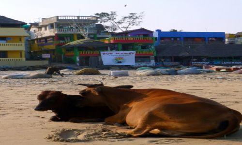 Zdjęcie INDIE / Tamil Nadu / Mamallapuram / miłośniczki  reggae